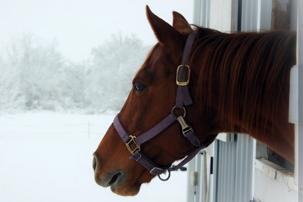a horse looking out a window at a snowy field