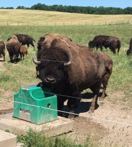 Livestock Waterer